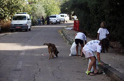 תושבי מצפה הילה יצאו לנקות את שאריות החגיגות (צילום: אבישג שאר-ישוב)