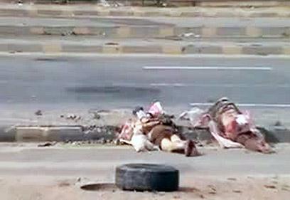 סורים שנורו למוות כשידיהם כפותות מאחורי גבם בעיר חומס (צילום: AFP PHOTO / YOUTUBE)