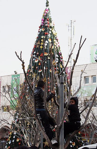 עץ אשוח מקושט בבית לחם (צילום: AFP)