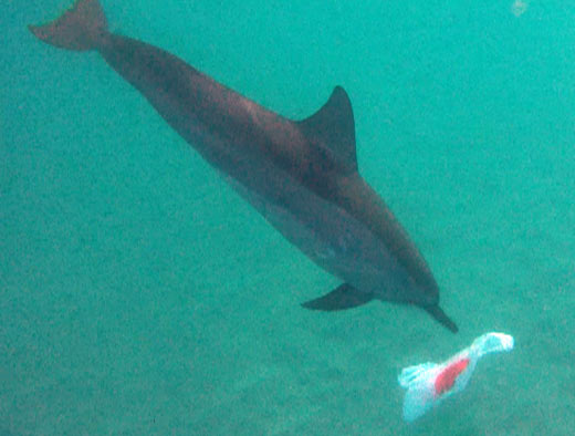Ynetnews Environment Watch Dolphin Struggles With