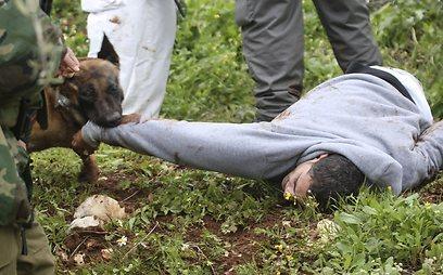ידו של שתווי בלועו של הכלב (AP)