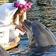 Cindy the Dolphin and Sharon Married!