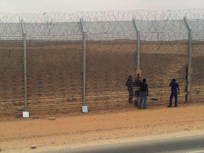 מעבים את גדר הגבול במצרים (צילום: יואב זיתון)