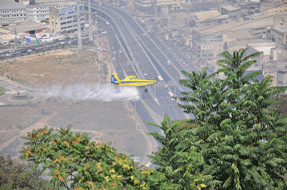 מטוסי הכיבוי הופעלו לאחר שעה וחצי  (צילום: מושיקו אלנקווה   )