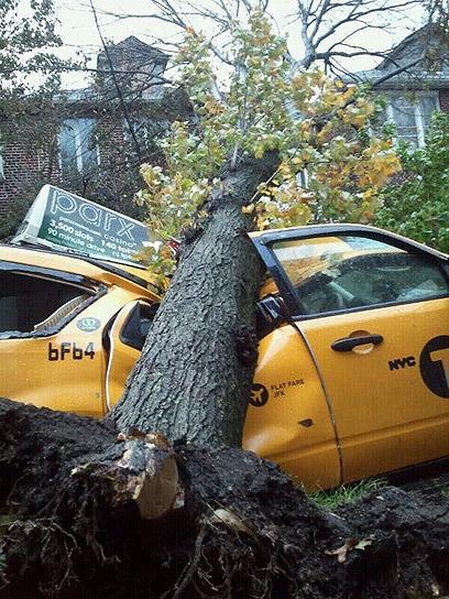 מנזקי הסופה. עצים קרסו, רחובות הוצפו (צילום: ישי שהרבני)