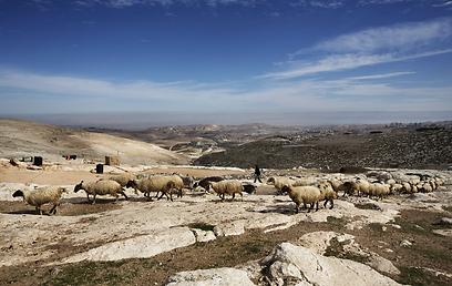 שטח E1 ליד ירושלים (צילום: AFP)