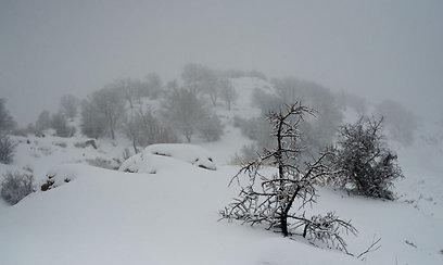 מזג אוויר סוער בגולן (צילום: בני דויטש)