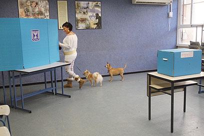 כלב מי שלא מצביע. תל-אביב, הבוקר (צילום: מוטי קמחי)