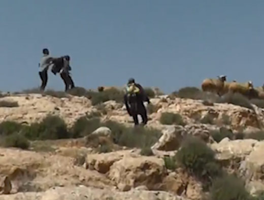 News - On tape: Settler attacks Palestinian shepherd