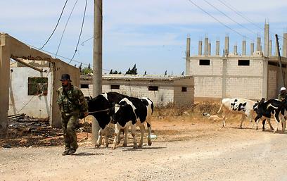 צבא אסד בקוסייר (צילום: רויטרס)