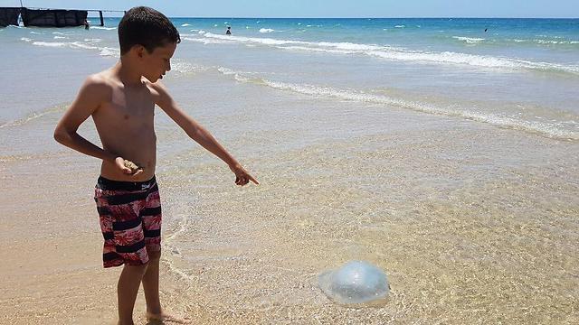 Jellyfish season officially begins