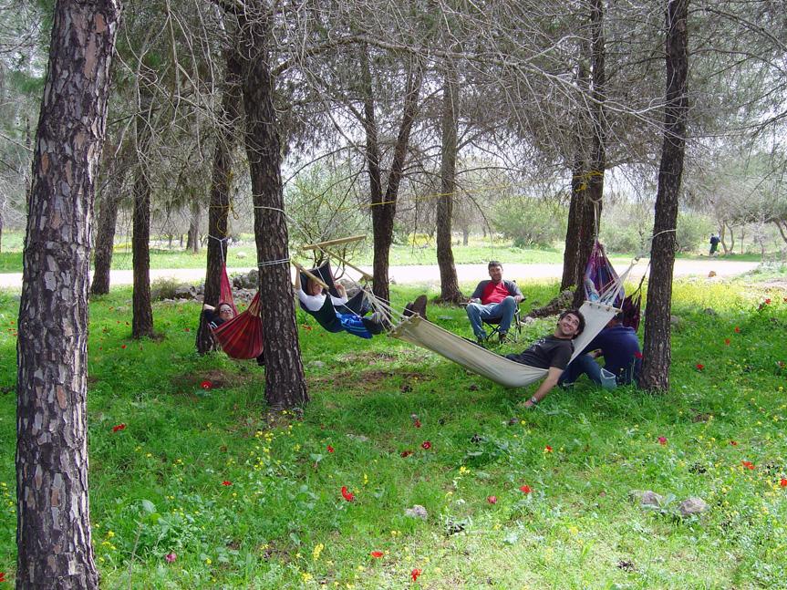 Анемоны в лесу Бейт-Кешет. Фото: Михаэль Хури, фотоархив ККЛ