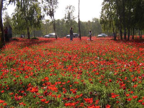 Лес Беэри. Фото: Михаэль Хури, фотоархив ККЛ