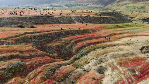 Цветение у Мертвого моря. Фото: Амир Алони, Управление национальных парков и заповедников