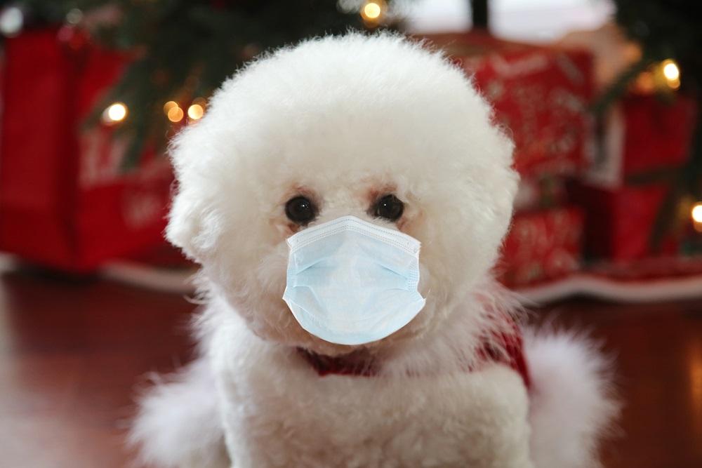 Собака в маске. Фото: shutterstock